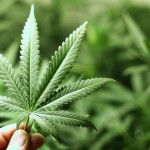 Pot Smokers at Risk for Brain Vessel Blockage
