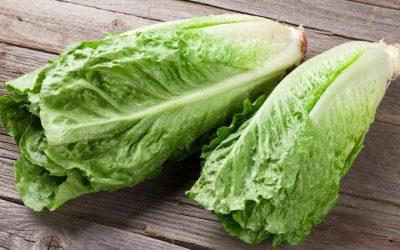 Romaine Lettuce E. coli Outbreak