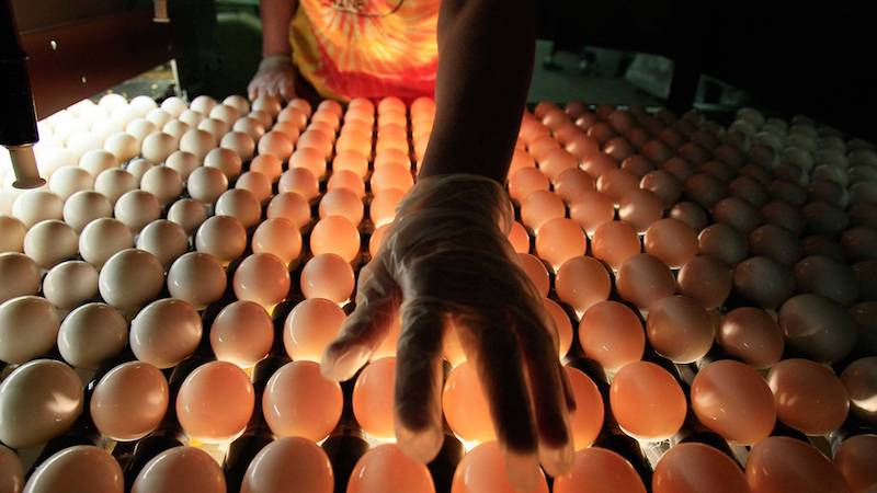Egg Farm in Salmonella Outbreak Identified